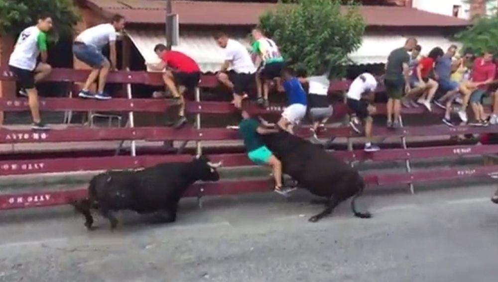 La vaquilla embiste al joven contra las vallas protectoras