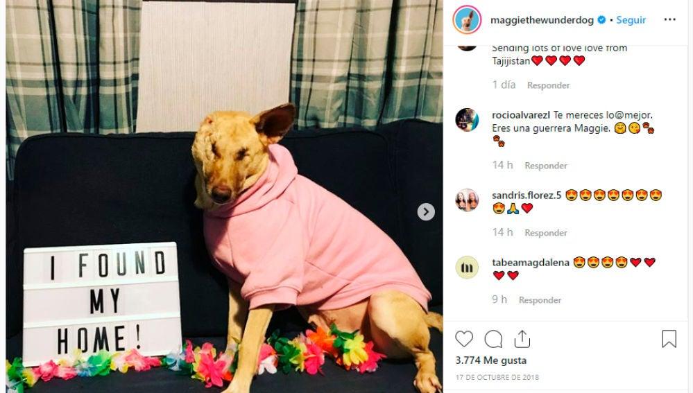 Maggie, la perrita ciega abandonada con 17 heridas de disparos