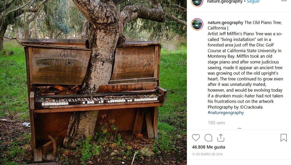 El viejo árbol piano