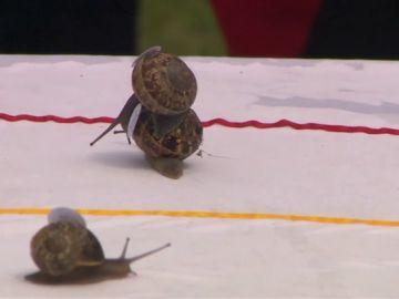 Reino Unido celebra su campeonato mundial de caracoles