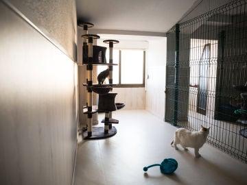 Hotel de lujo para gatos