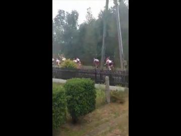 Duras imágenes: el momento de la brutal caída en la que murió el ciclista Bjorg Lambrecht