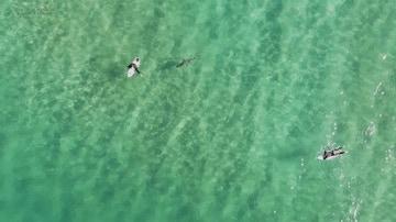 Tiburón nadando hacia un surfero