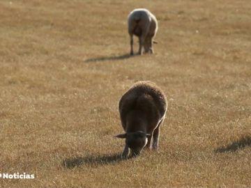La ONU pide que dejemos de consumir carne para salvar el planeta