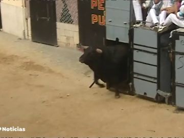 El Puig celebra los 'bous al carrer del Puig', una tradición que se repite cada año no exento de críticas