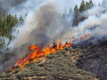 Vista del incendio declarado en la zona de Artenara