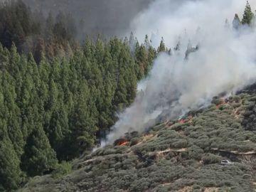 Desalojados los vecinos de 12 barrios por el incendio de Gran Canaria