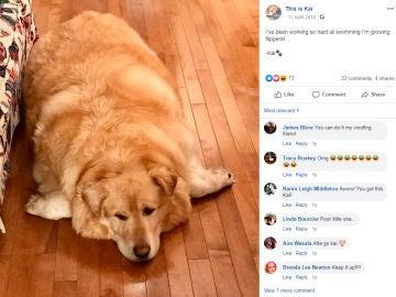 Kai perro con sobrepeso