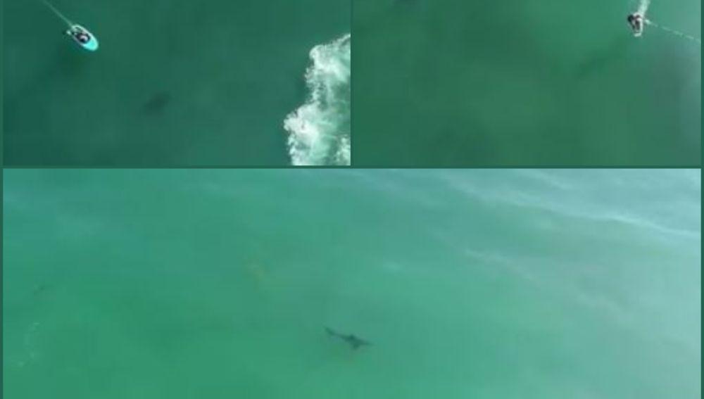 Tiburones en Dana Point