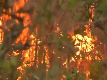 Ya se han arrasado más de un millón y medio de hectáreas en el Amazonas ante la pasividad de Bolsonaro