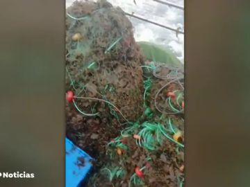 La invasión de algas en Tarifa preocupa a pescadores y turistas