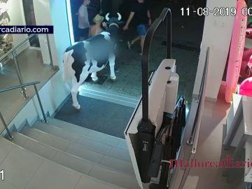 Detienen a un hombre al robarla réplica de una vaca en Mallorca