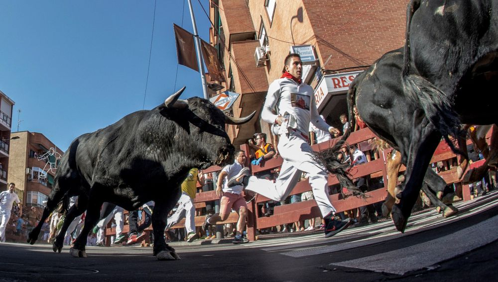 Imagen del quinto encierro de San Sebastián de los Reyes