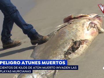 Atunes muertos en Murcia.