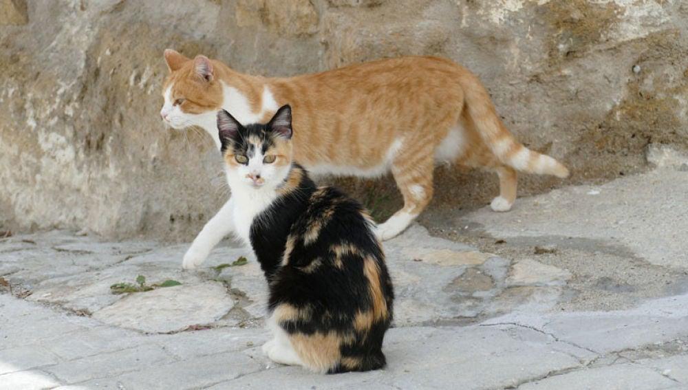 Imagen de archivo de gatos