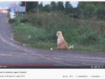 El reencuentro de un perro con sus verdaderos dueños