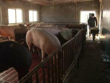 China subastará 10.000 toneladas de cerdo para estabilizar la subida de precios
