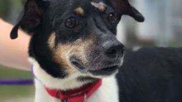 Zippy, el perro héroe