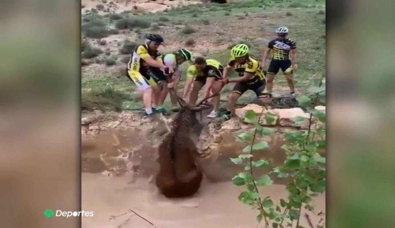 El heroico rescate de un grupo de ciclistas a un ciervo que se estaba ahogando