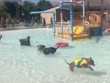 Perros jugando en un parque acuático
