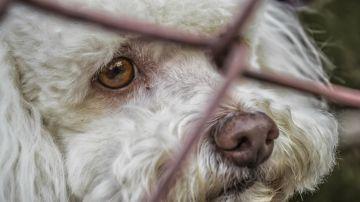 perros abandonados Ávila