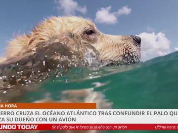 Un perro cruza el océano Atlántico