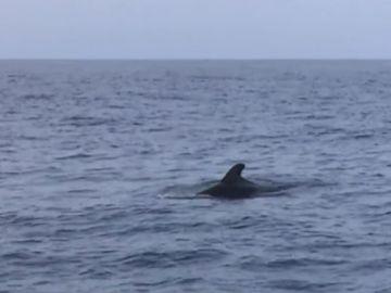 Avistamiento de cetáceos en Canarias