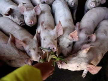 """Los científicos alertan de una nueva y contagiosa gripe porcina con """"potencial pandémico"""" en China"""