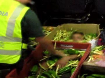 Inmigrante oculto bajo kilos de verduras en Almería