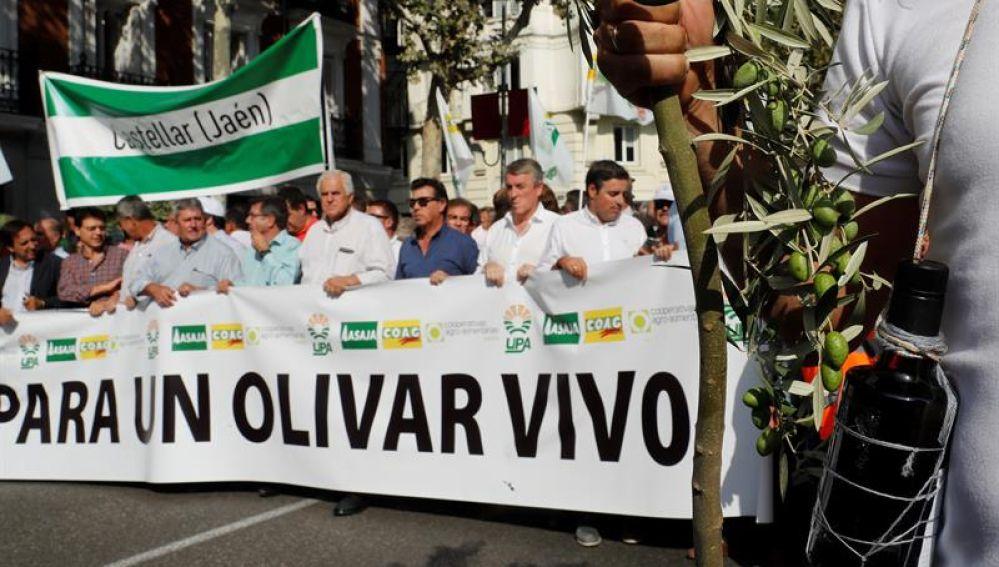 Manifestación olivareros
