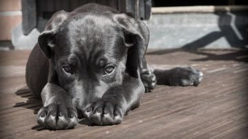 Consejos para mantener los suelos limpios y sin huellas si tienes perro