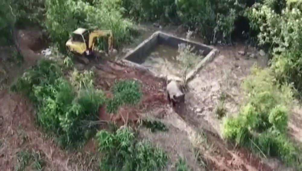 Cría de elefante atrapada en China