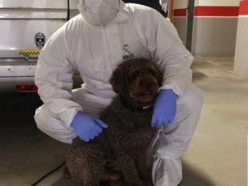 Marley, el perro de la Guardia Civil