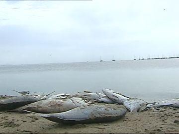 El Consejo de Gobierno se reúne esta tarde con carácter extraordinario por la situación del Mar Menor