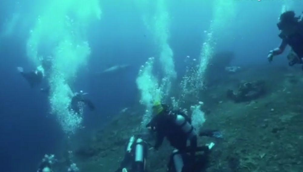El tiburón, entre los buceadores