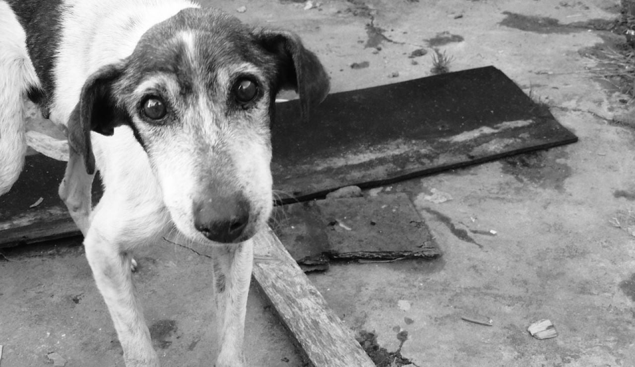 Perro callejero (archivo)