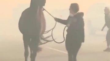El dramático momento en el que evacúan a unos animales por los incendios de California