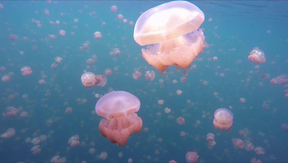 Lago lleno de medusas