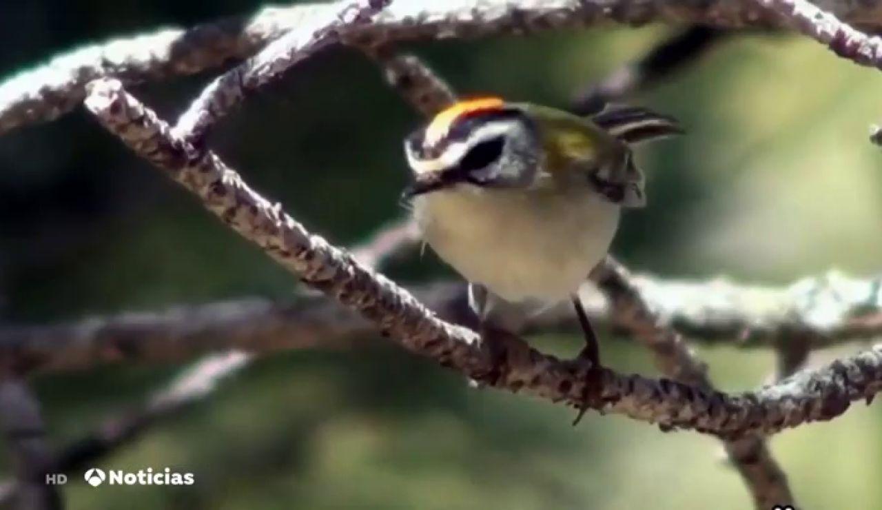 Cerca de 95 millones de pájaros han desparecido en los últimos 20 años en España