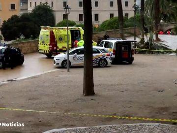 Una mujer muere al caerle parte de una palmera en Palma de Mallorca