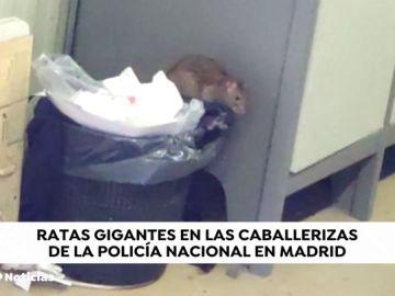 Una plaga de ratas invaden unas instalaciones de la Policía Nacional en Madrid