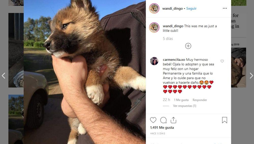 Cuenta de Instagram de Wandi Dingo
