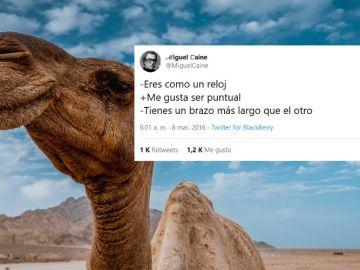 Los mejores tuits de @miguelcaine