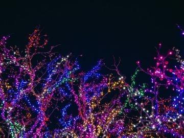 Encendido de luces de Navidad 2019