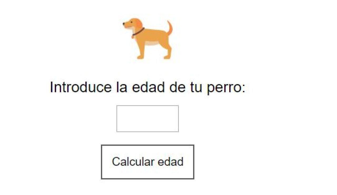 Calculadora: qué edad tiene tu perro