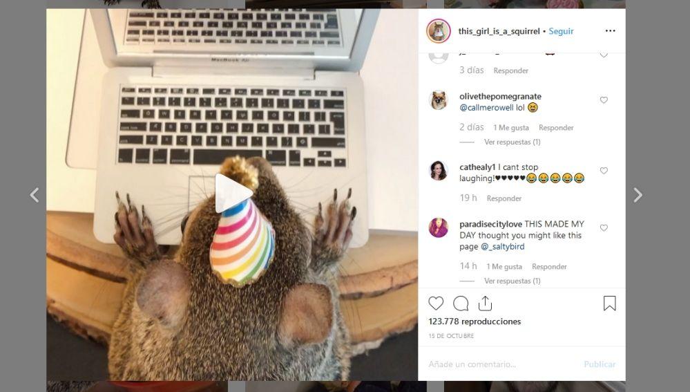 Instagram de la ardilla Jill