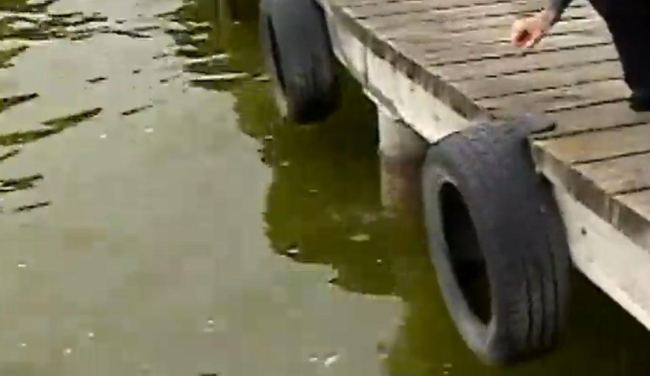 La Albufera en peligro por contaminación