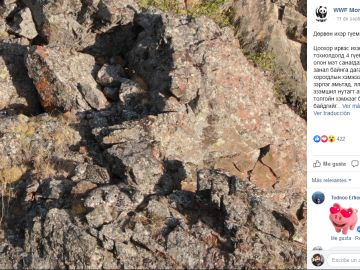 Leopardos escondidos en Mongolia