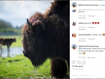 Helen la bisonte