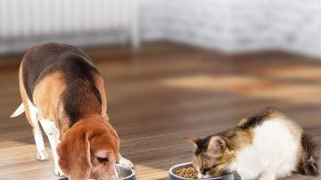 Comedero para mascotas